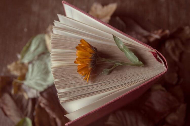 Knjiga je moje življenje
